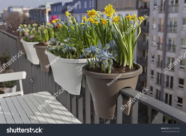 Potted spring flowers on balcony fence stock photo 501107359 potted spring flowers on balcony fence stock photo 501107359 shutterstock mightylinksfo