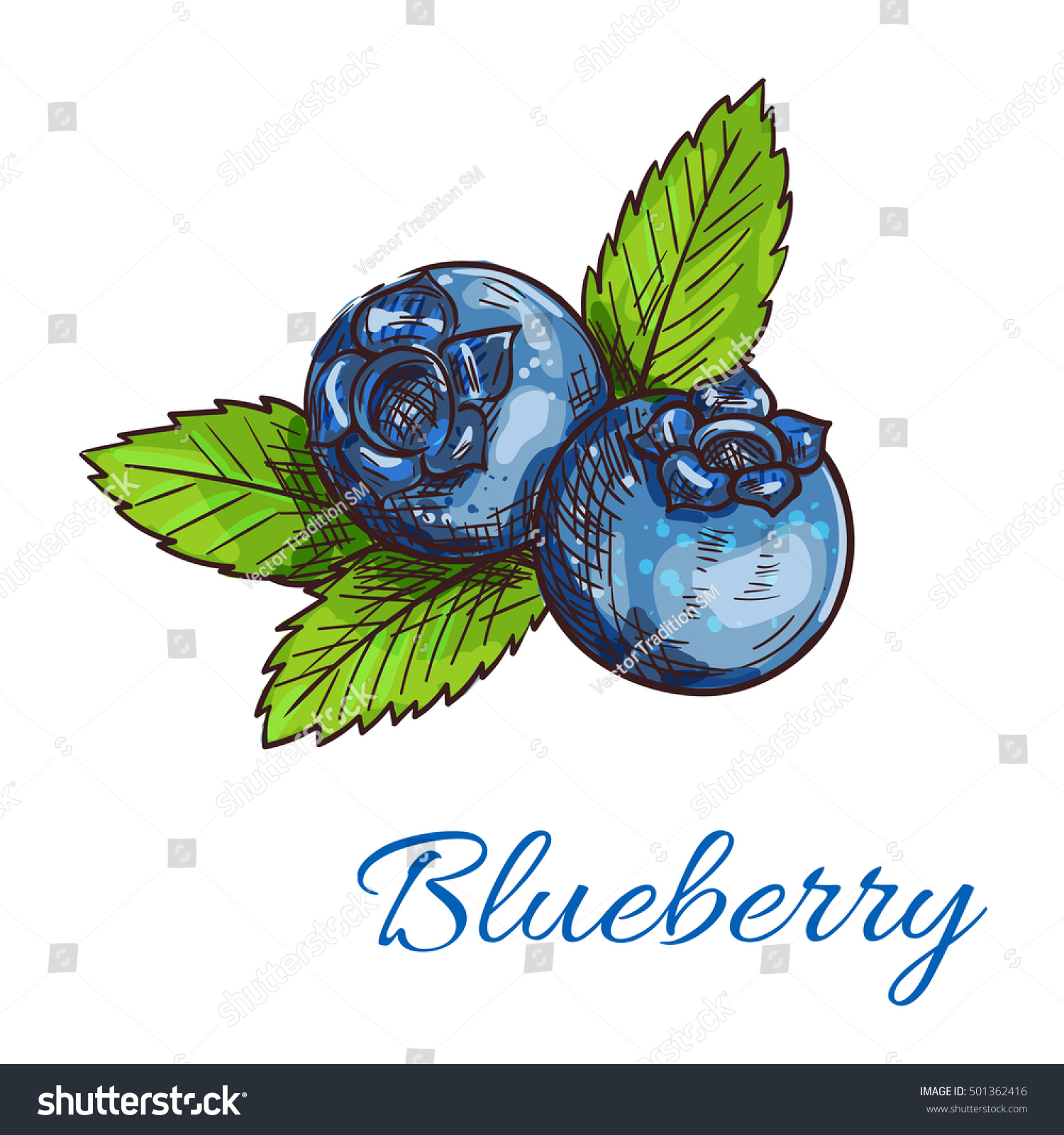 Blueberry Fruits Isolated Sketch Healthy Natural Stock ...