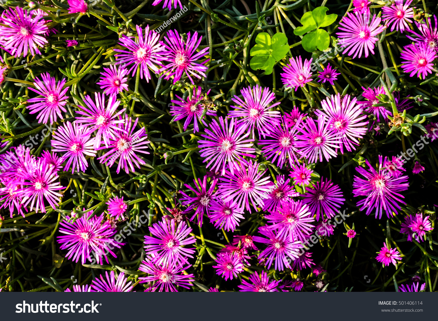 Photo Picture Of Beautiful Blooming Flower Background Ez Canvas
