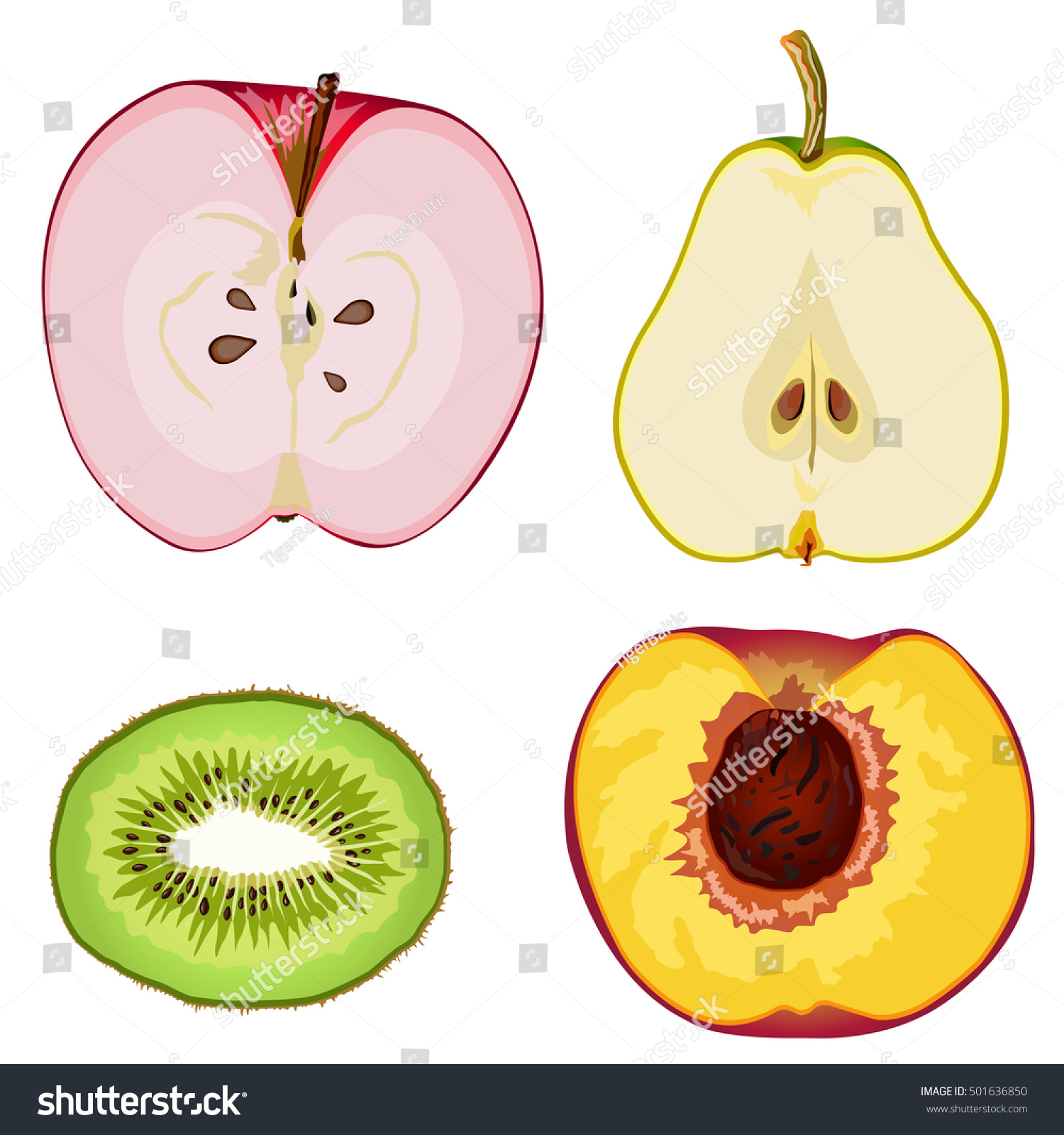 Fruit Anatomy Apple Pear Kiwi Peach Stock Vector 501636850