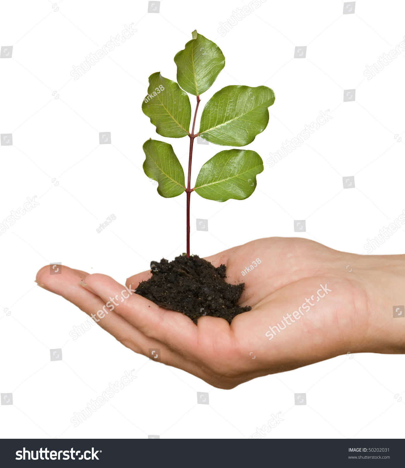 Tree seedling hand symbol nature protection stock photo 50202031 tree seedling in hand as a symbol of nature protection biocorpaavc