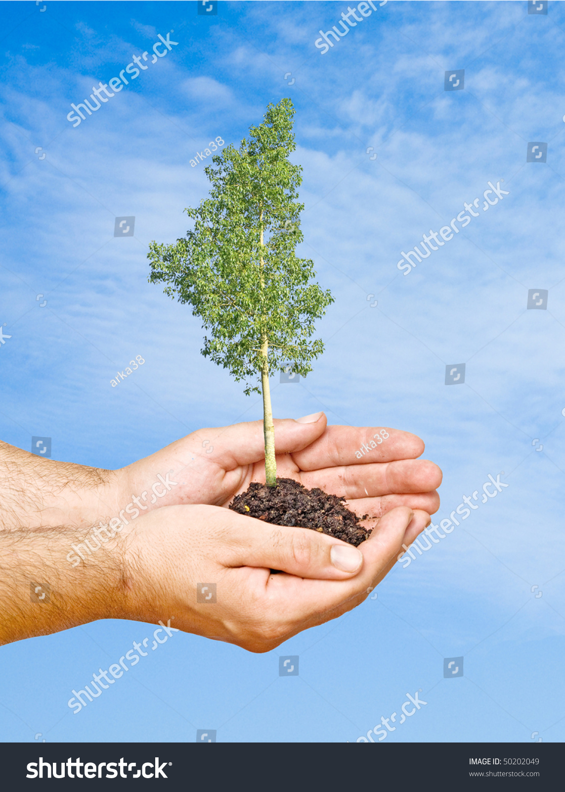 Tree hands symbol nature protection stock photo 50202049 tree in hands as a symbol of nature protection biocorpaavc