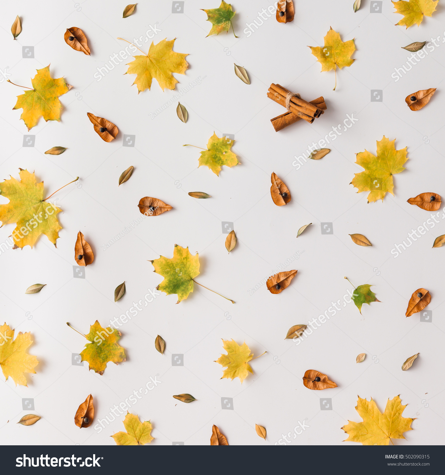Autumn leaves pattern on white background Flat lay