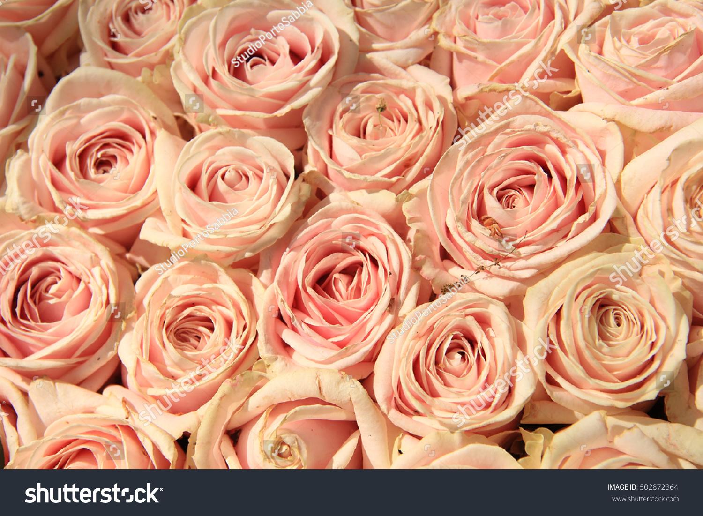Pink Roses In A Wedding Flower Arrangement Ez Canvas