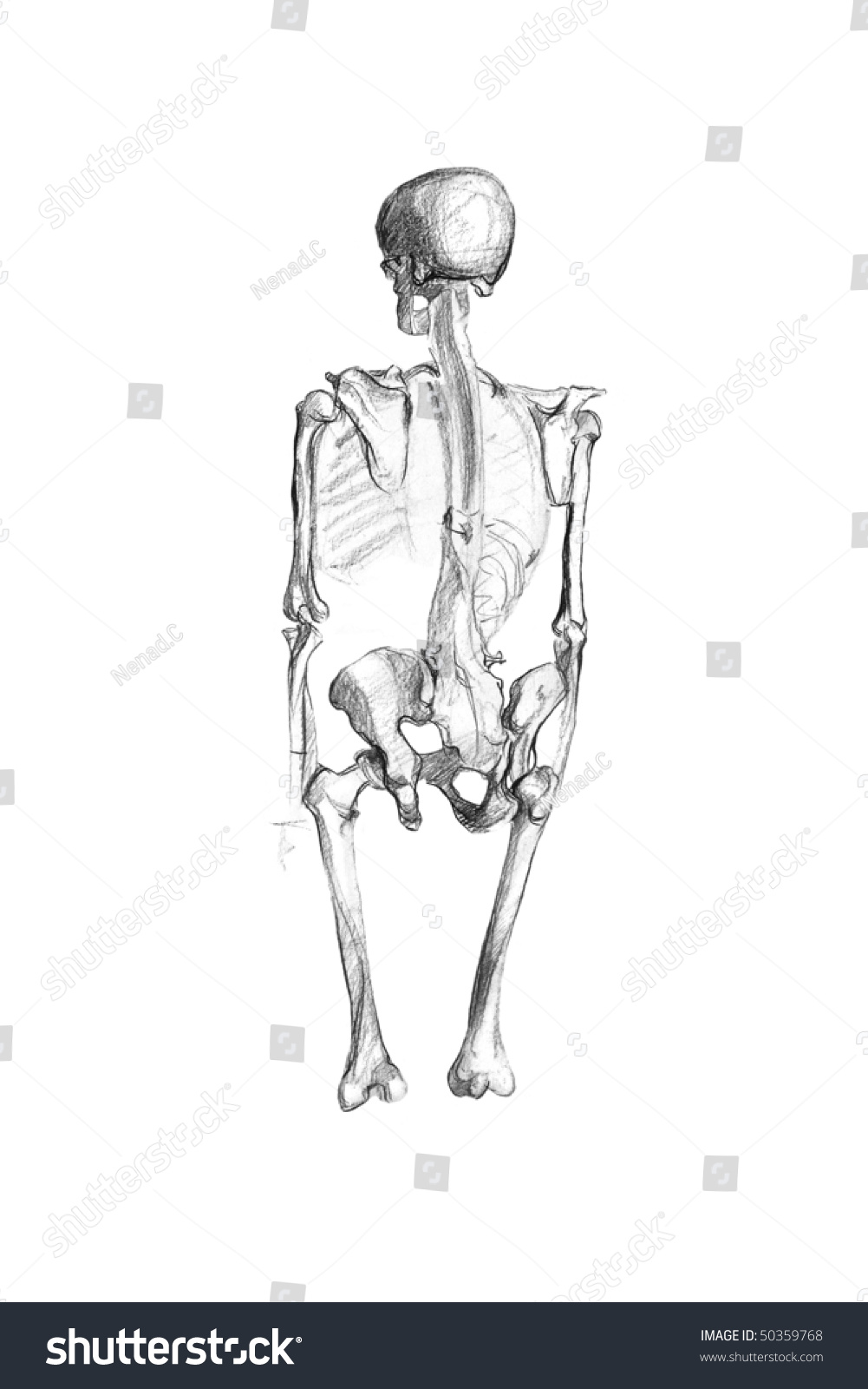 Royalty Free Stock Illustration Of Human Skeleton Original Drawing