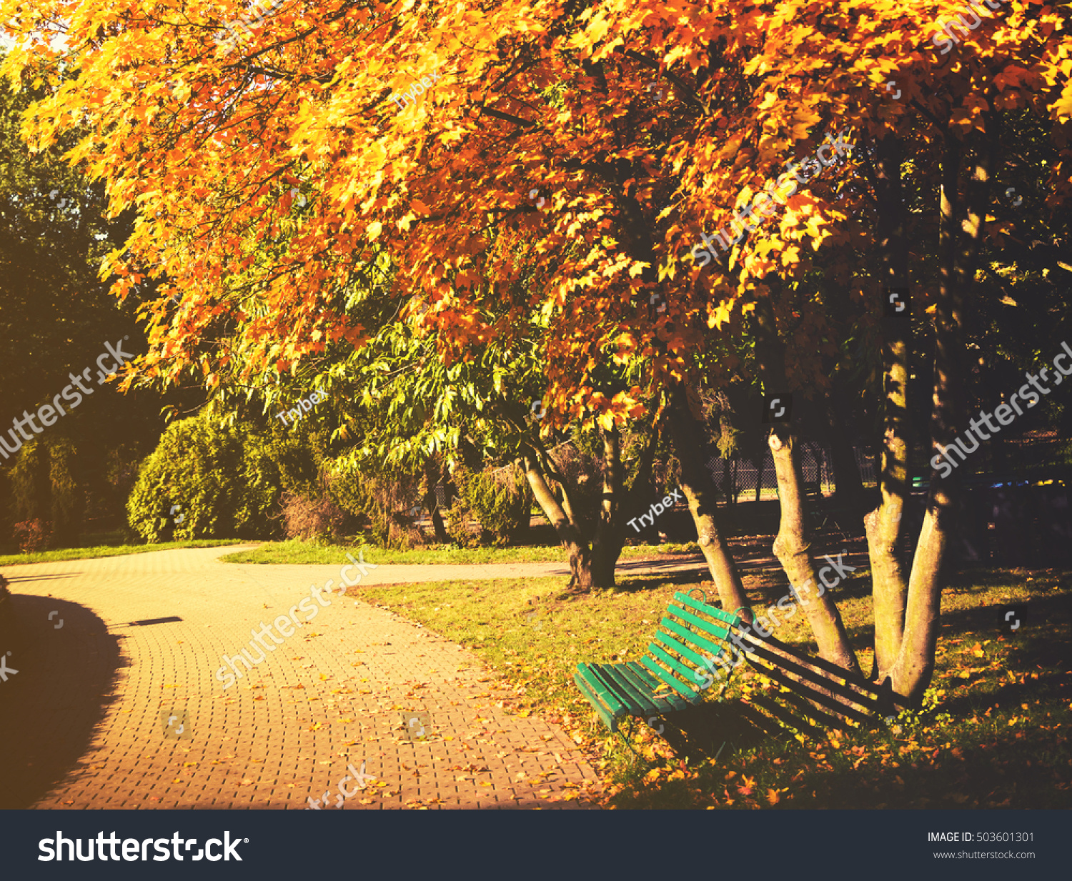 beautiful colorful autumn leaves park stock photo 503601301