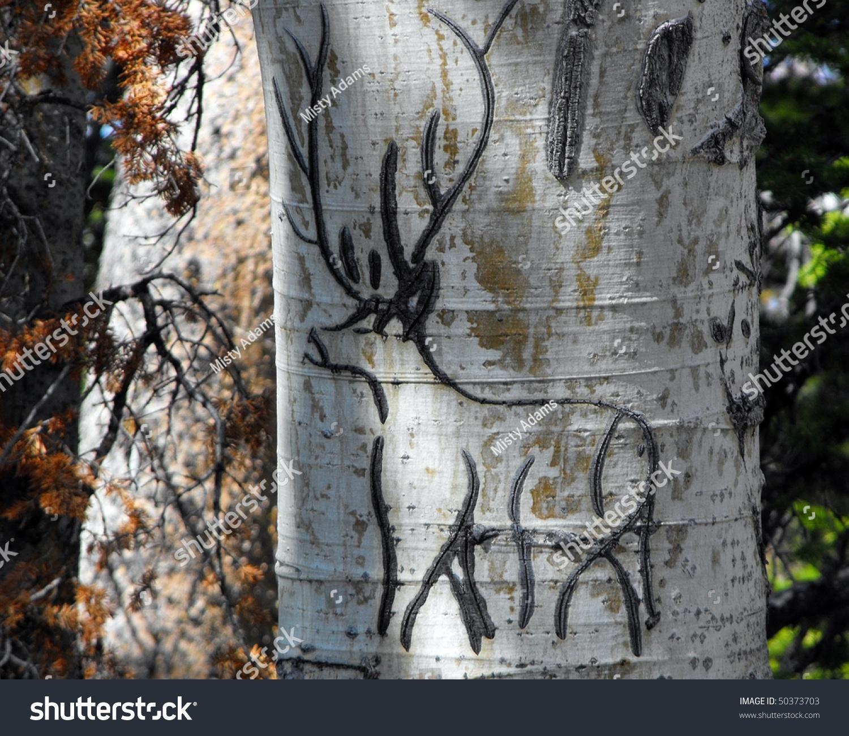 Deer carving aspen tree stock photo shutterstock