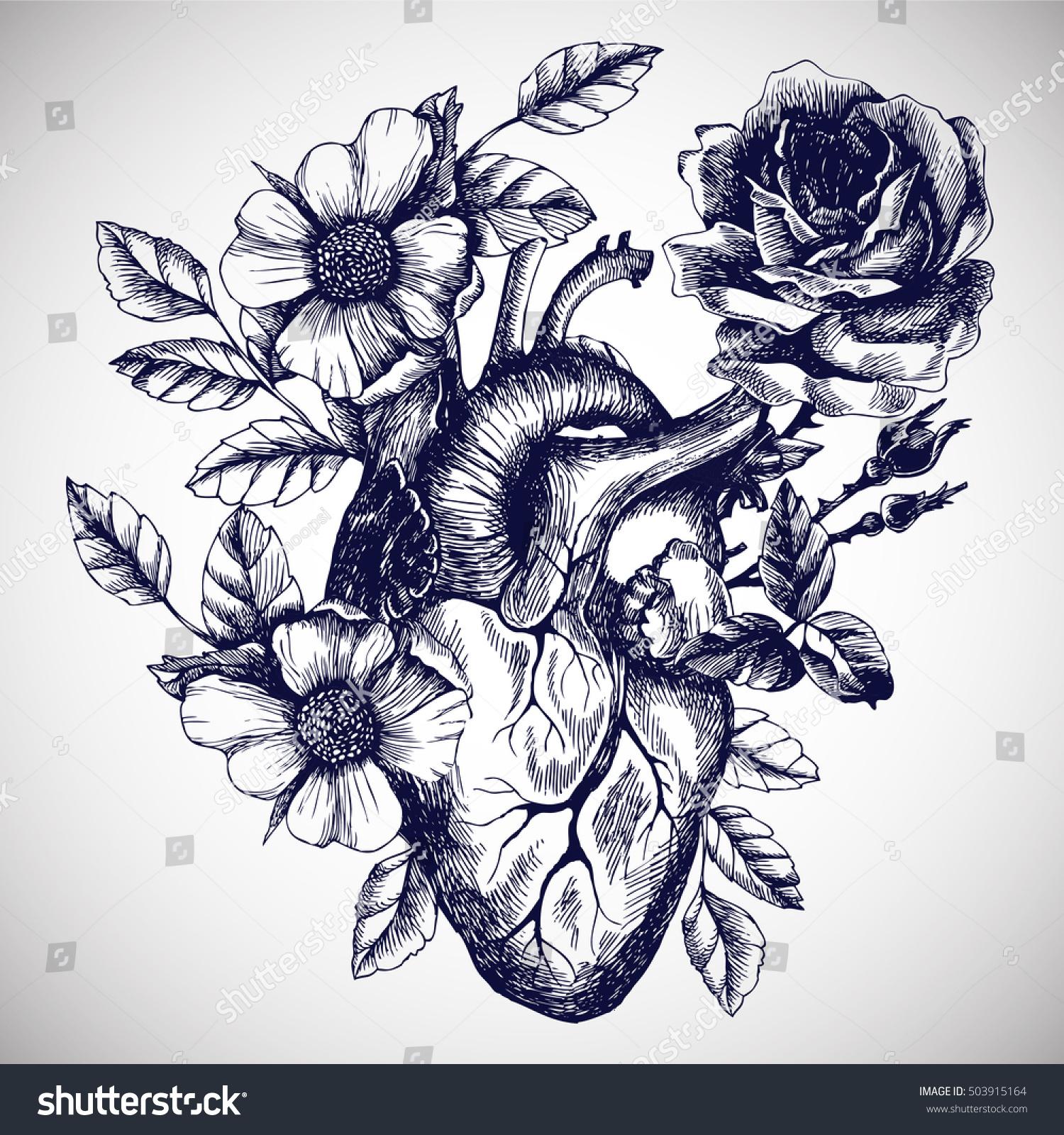 Blooming Anatomical Human Heart Vector Hand Stock Vector (Royalty ...