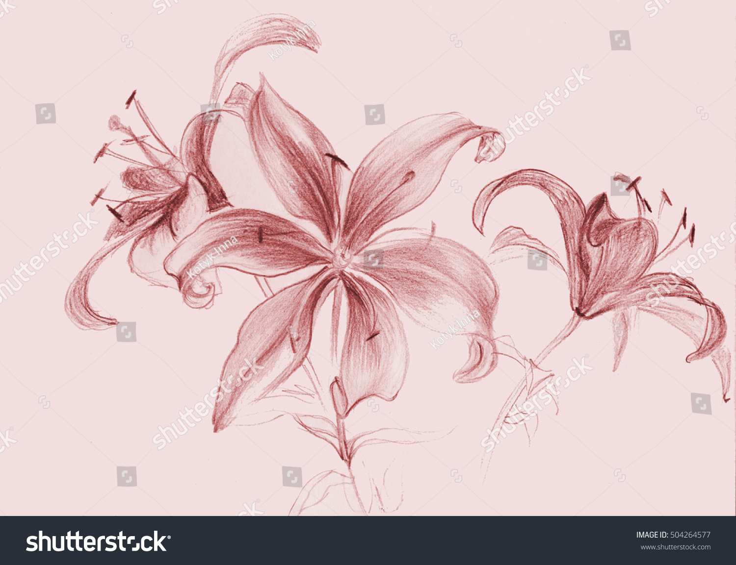 Flowers Lilies Figure Sanguine Wallpaper Use Stock Illustration
