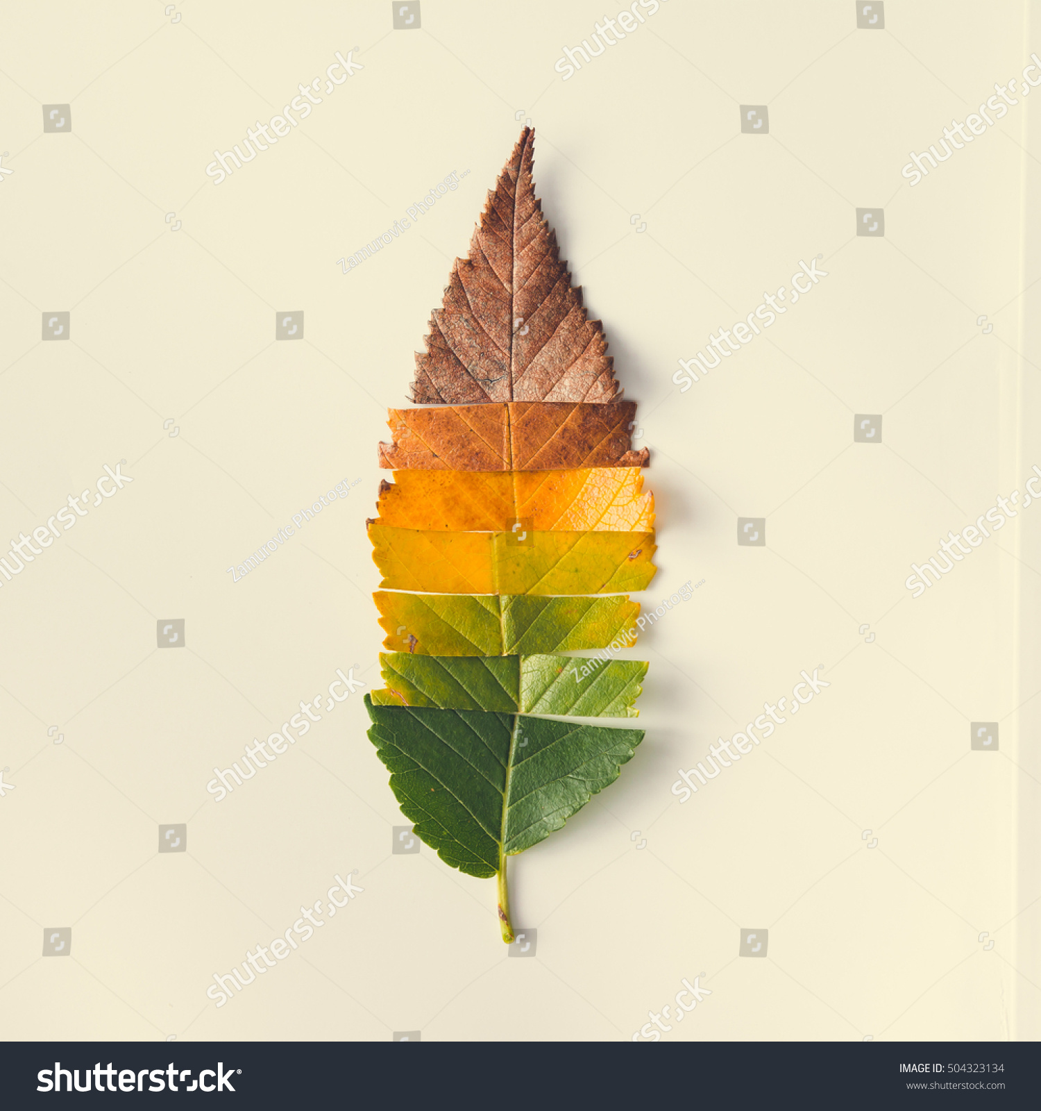 creative layout colorful autumn leaves flat stock photo 504323134