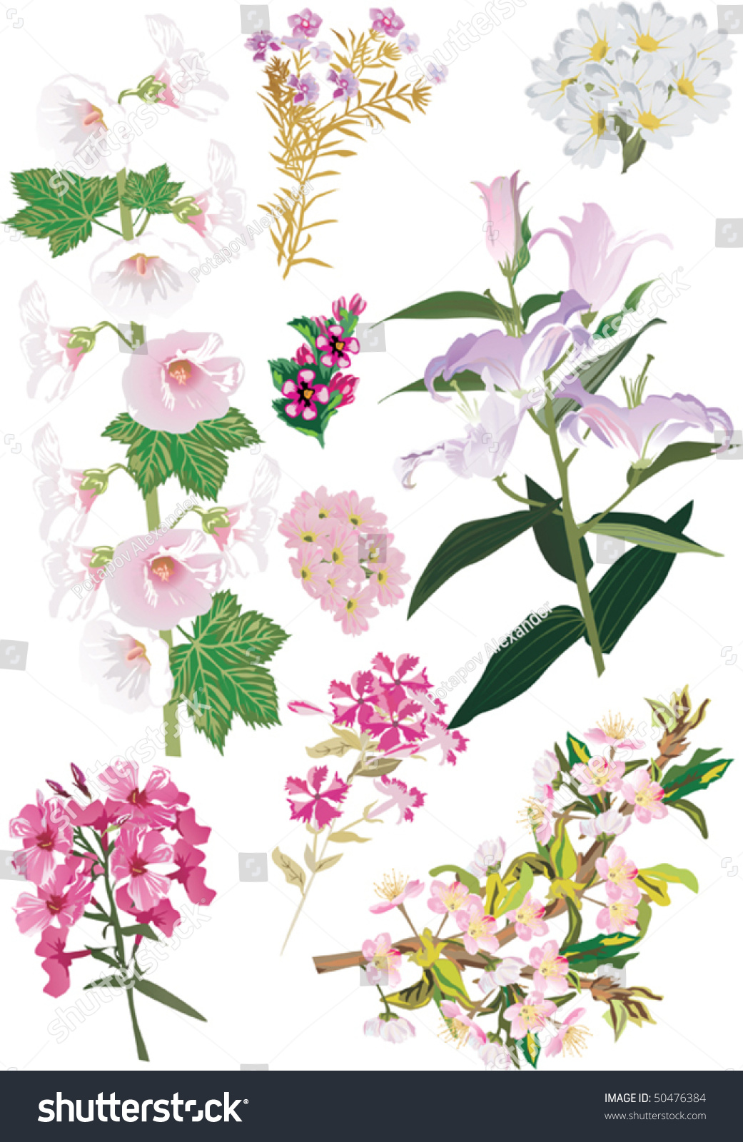Illustration With Different White And Pink Flowers Collection Ez