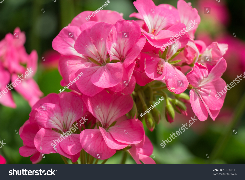 Beautiful colorful winter flowers ez canvas id 504884113 izmirmasajfo