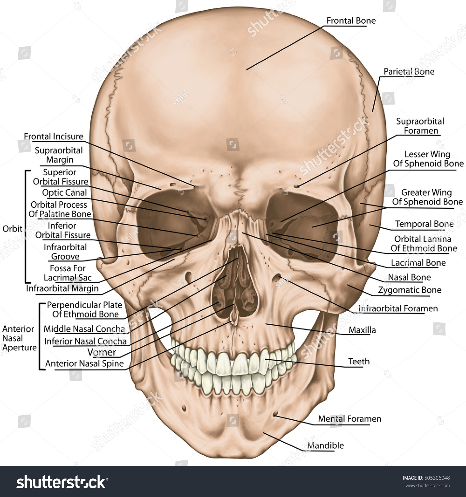 Bones Cranium Bones Head Skull Boundaries Stock Illustration ...