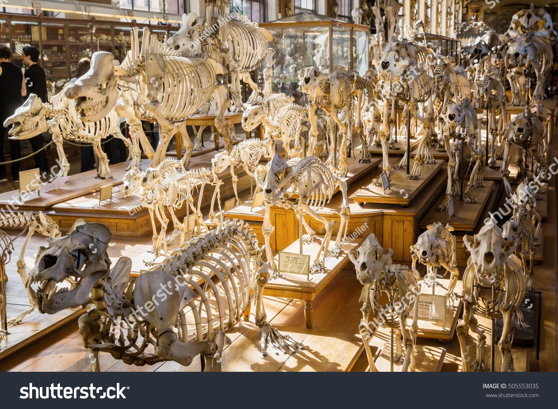 Paris France October 16 2016 Skeletons Stock Photo Edit Now