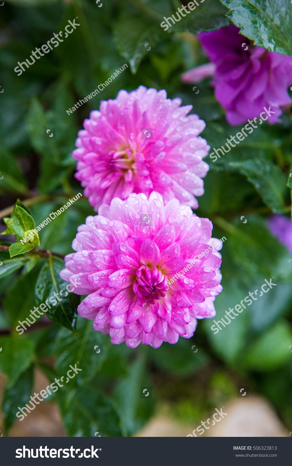 Beautiful colorful winter flowers ez canvas id 506323813 izmirmasajfo