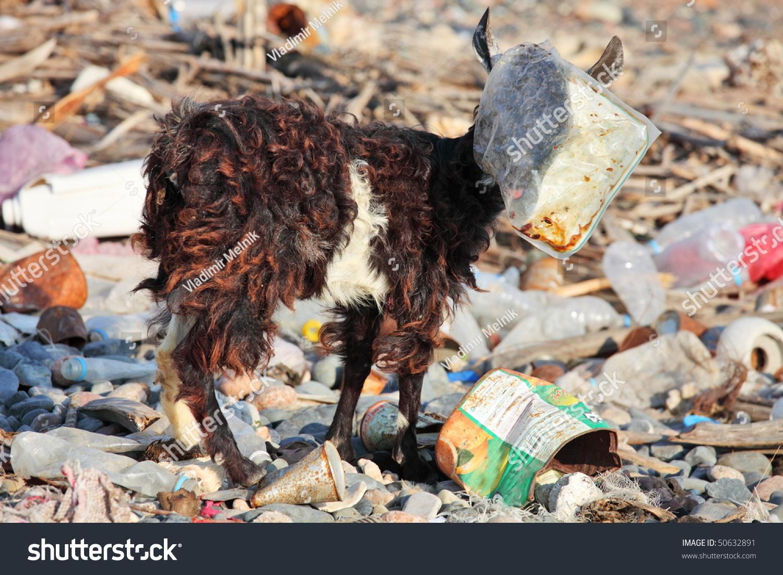 Goat Plastic Bag On Head Manmade Stock Photo 50632891