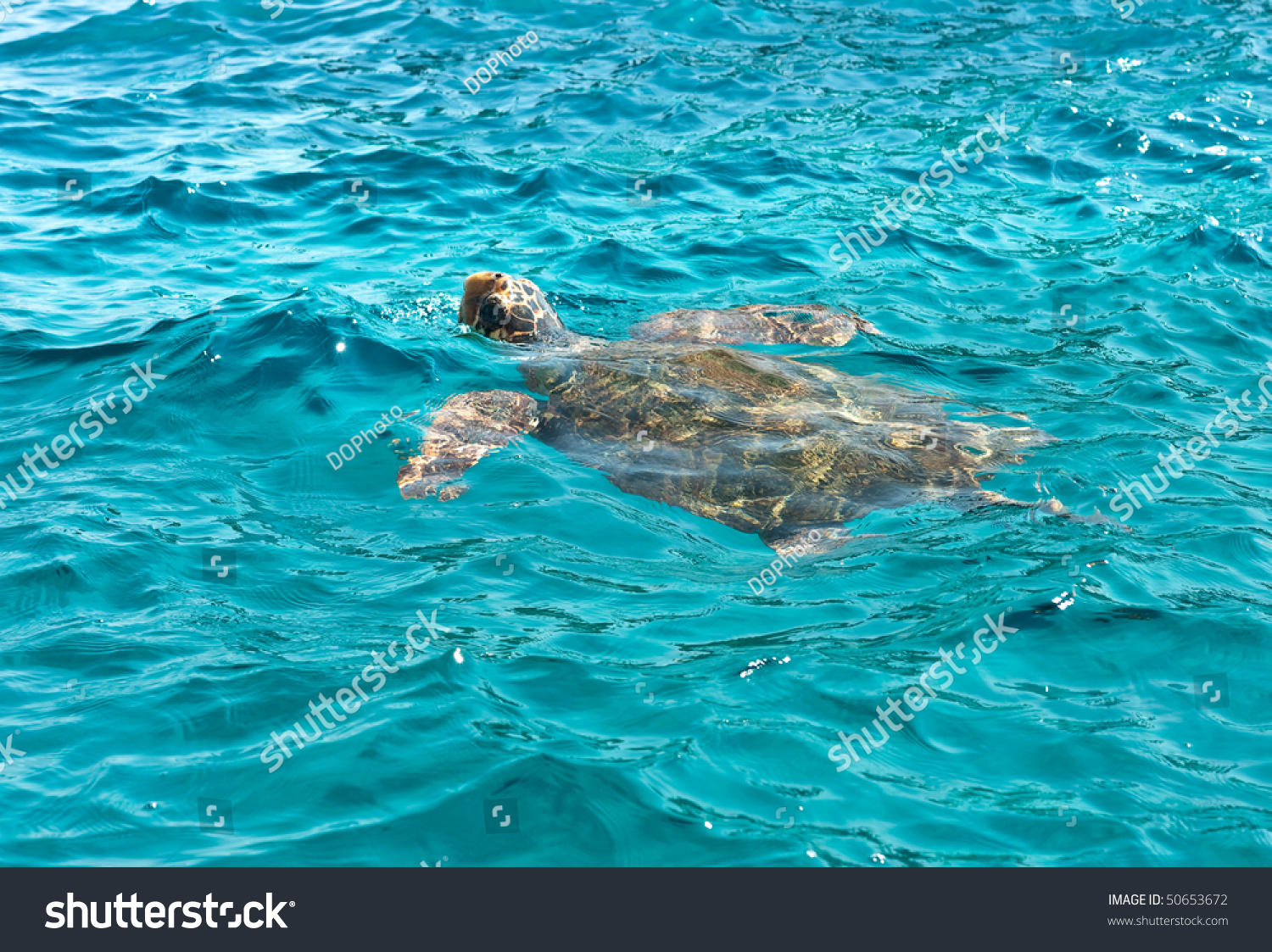 caretta women How popular is caretta caretta is a rare first name for women caretta is an equally rare surname for all people (2000 us demographics.