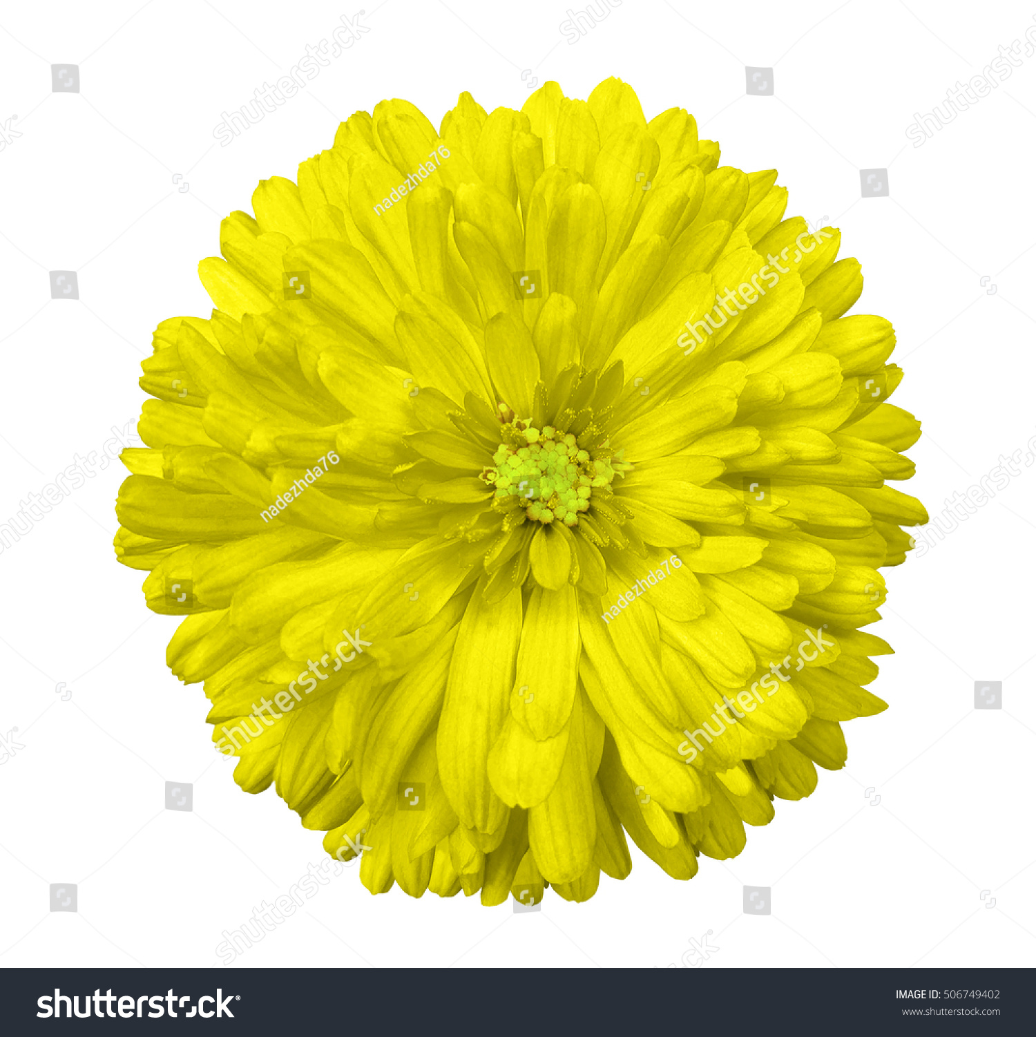 Yellow Flower White Isolated Background Clipping Stock Photo Edit