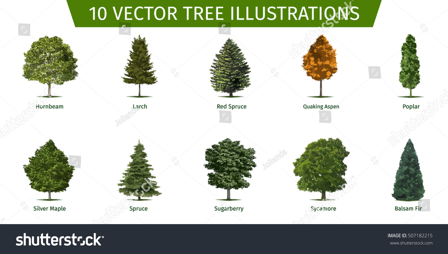 Different tree sorts names illustrations tree stock vector for Types of trees and their meanings