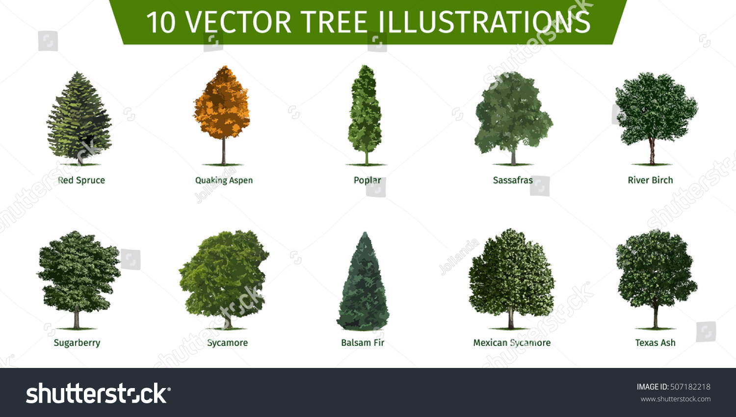different trees and their names beatiful tree