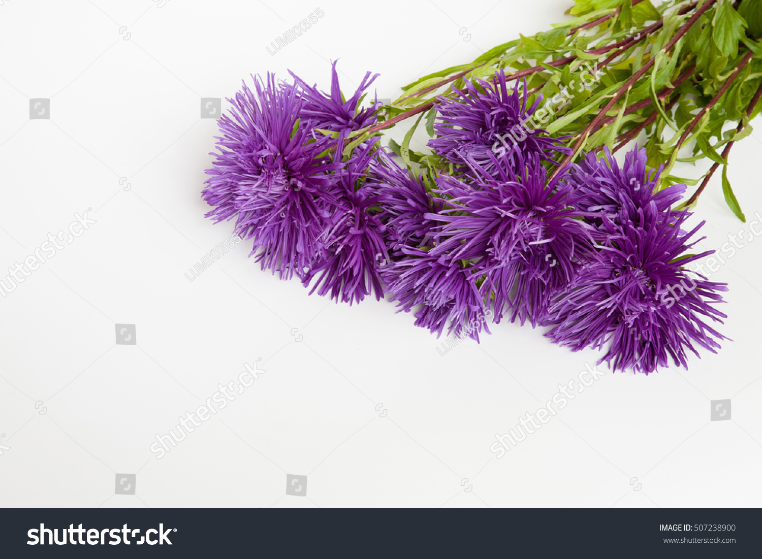 Bouquet Needle Purple Flowers Aster On Stock Photo Edit Now