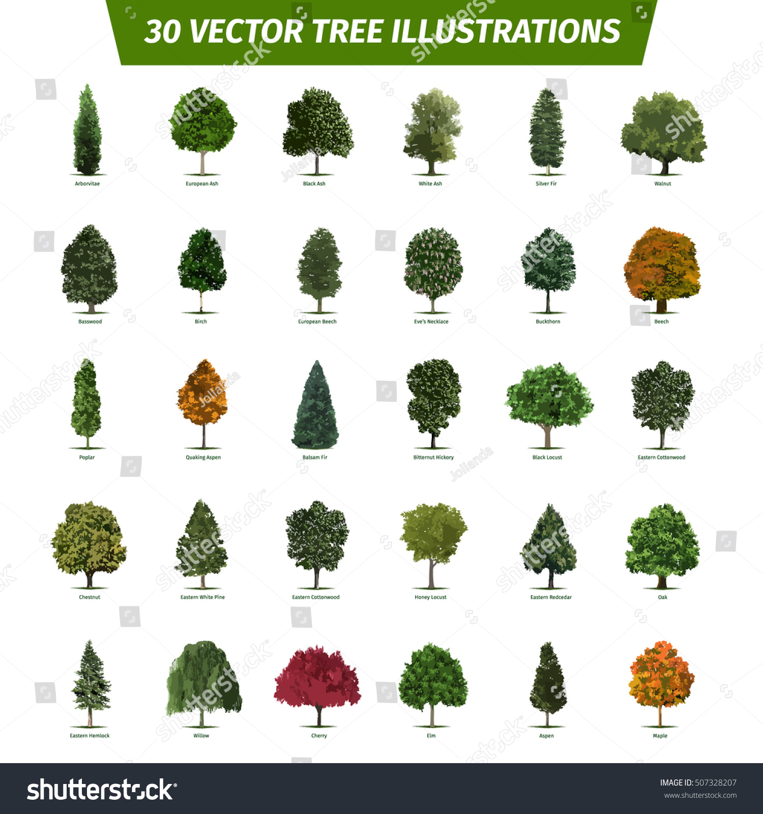 Thirty Different Tree Sorts Names Illustrated Stock Vector