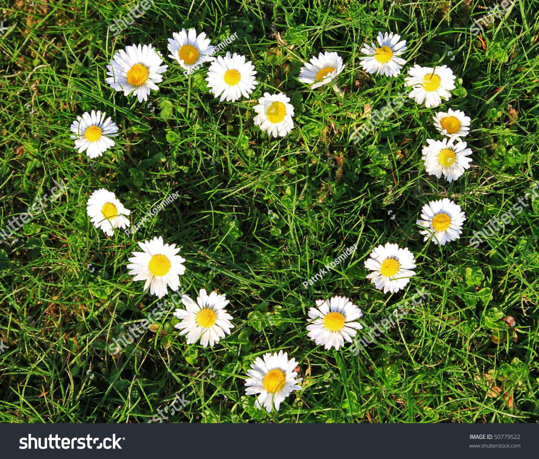 Daisy Flowers Heart Shape Stock Photo Edit Now 50779522 Shutterstock