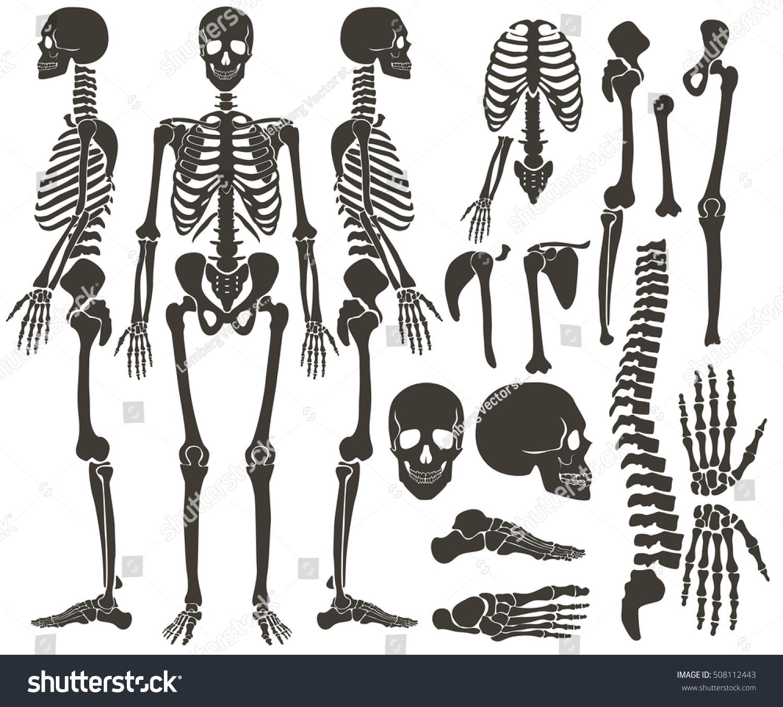Human Bones Skeleton Dark Black Silhouette Stock Vector Royalty
