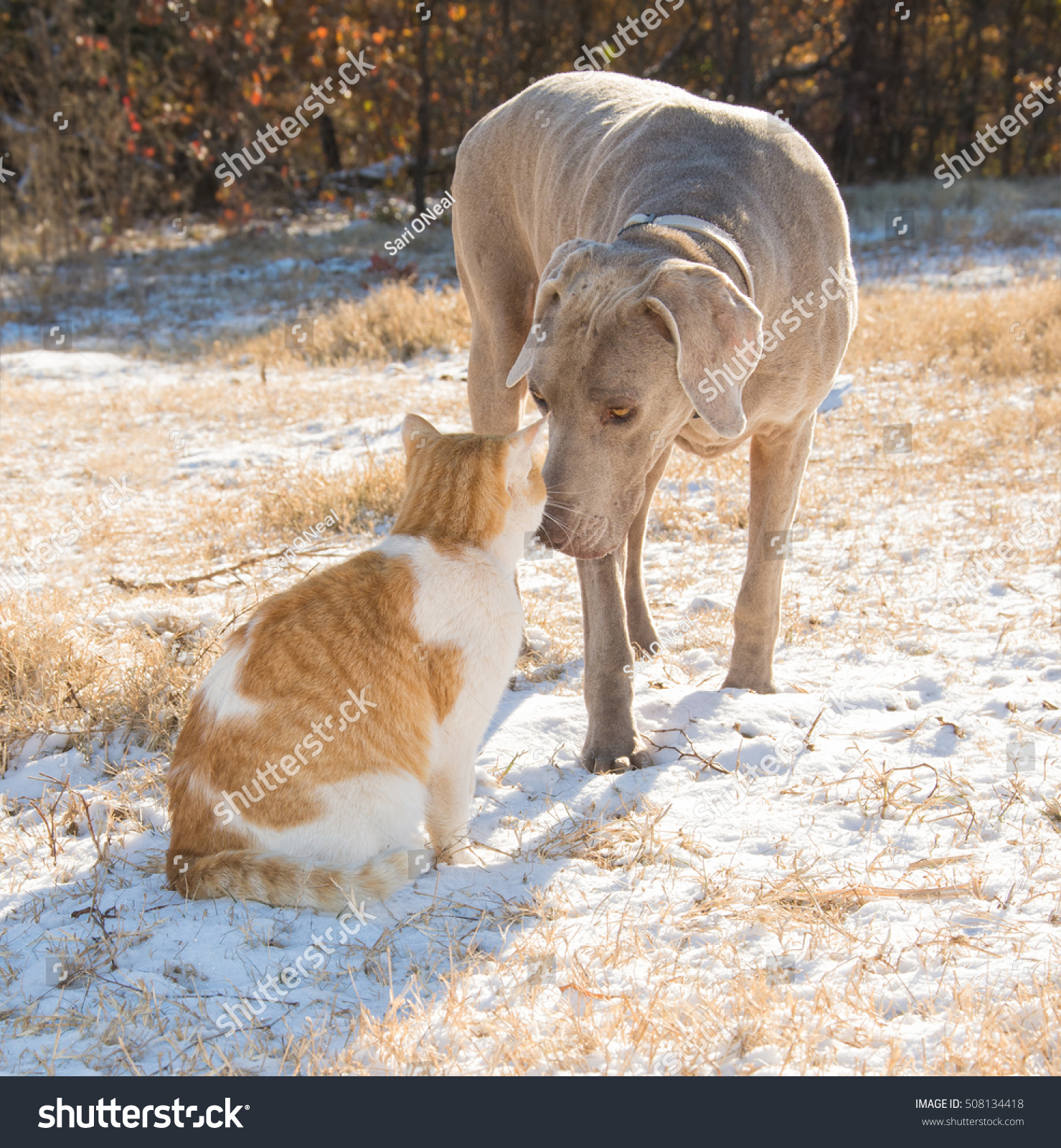 stock-photo-dog-and-cat-nose-to-nose-in-