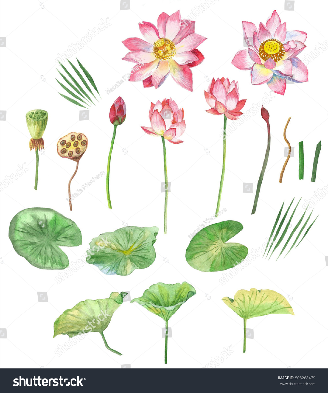 Lotus flowers hand painted watercolor clip stock illustration lotus flowers hand painted watercolor clip art izmirmasajfo