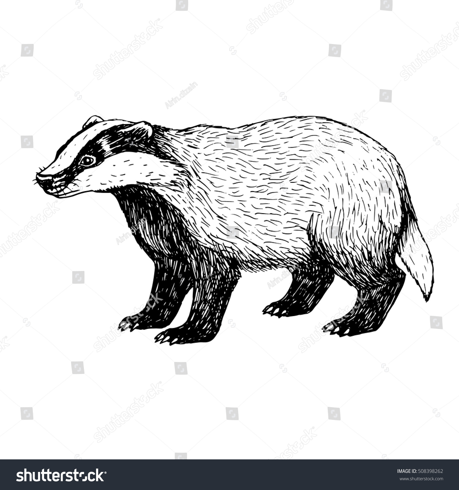 Uncategorized Badger Drawing hand drawn badger retro sketch isolated stock vector 508398262 vintage style doodle linear graphic design