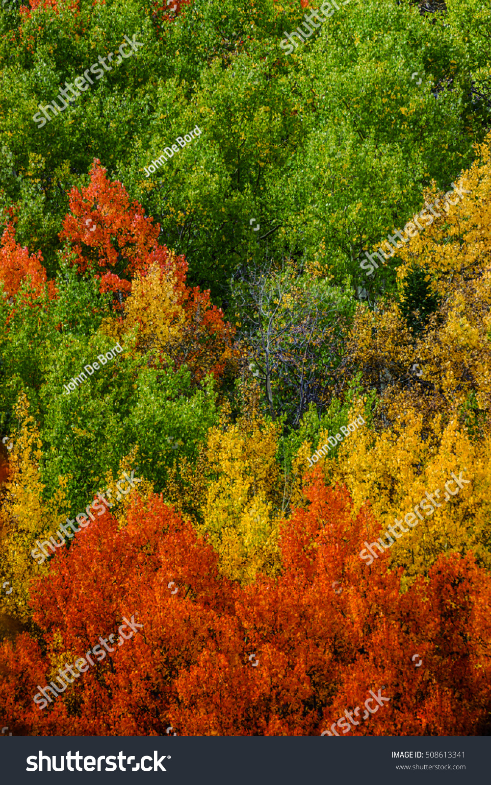 cluster of brightly colored autumn trees | EZ Canvas