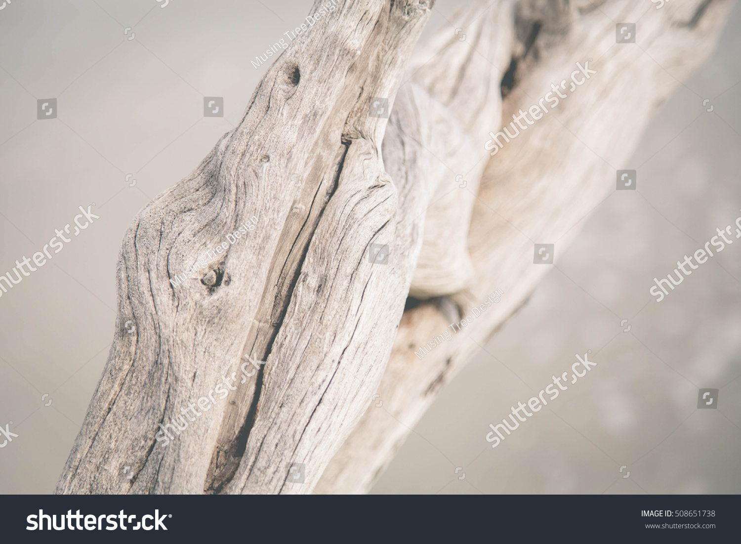 Details of driftwood on the beach. #508651738