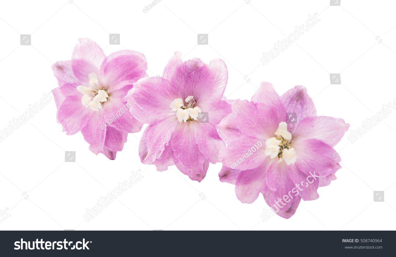 Violet Delphinium Flower Isolated On White Ez Canvas