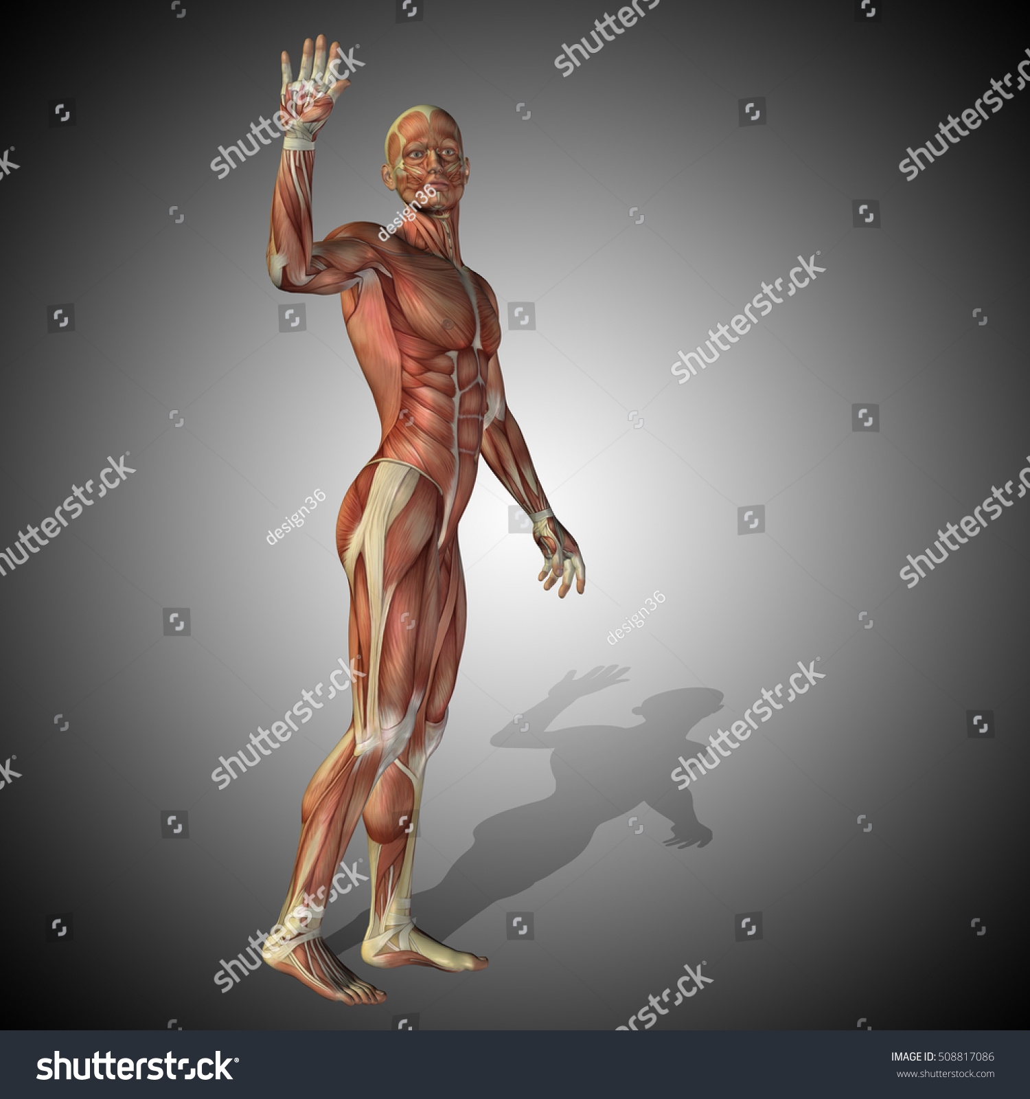 Concept strong human man 3D illustration anatomy body with muscle ...
