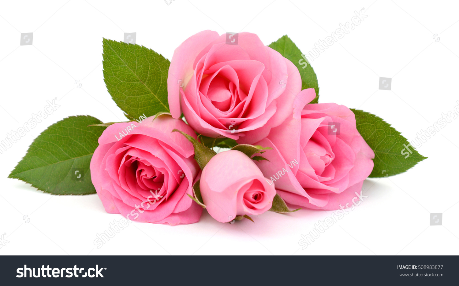 Beautiful Bouquet Pink Rose Flowers Isolated Stock Photo Royalty