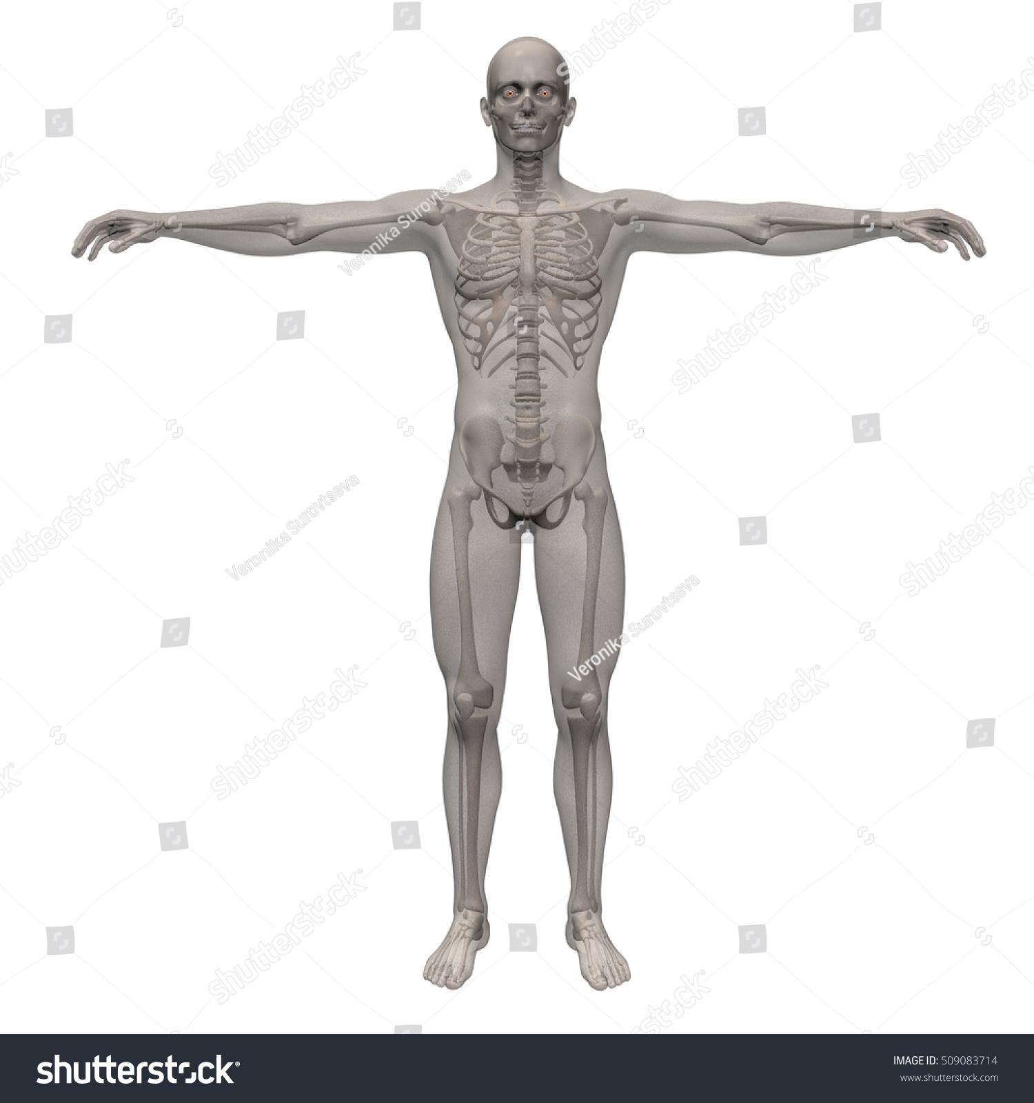 3 D Render Human Skeleton Inside Transparent Stock Illustration