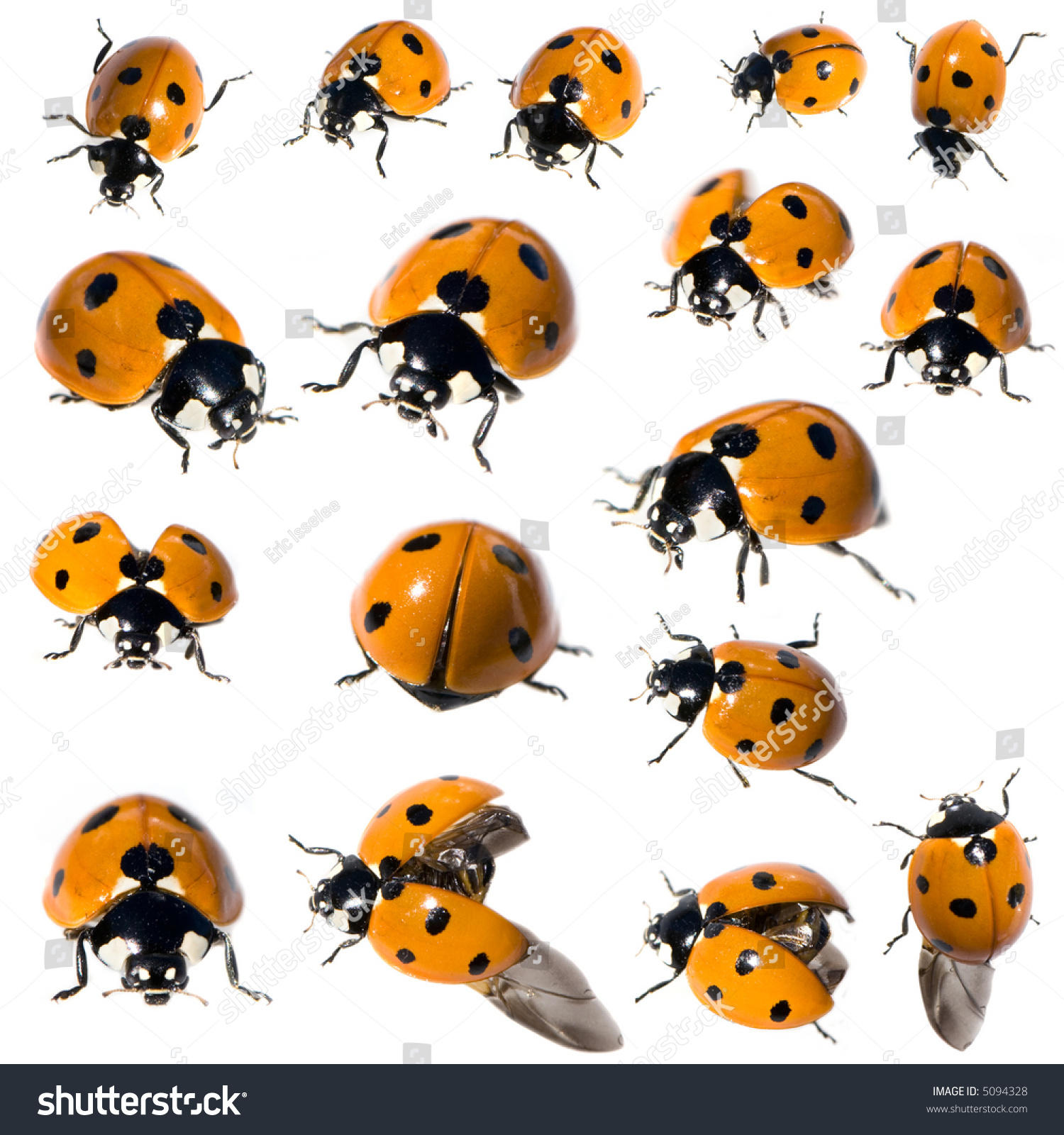 Stock Photo Spot Ladybird