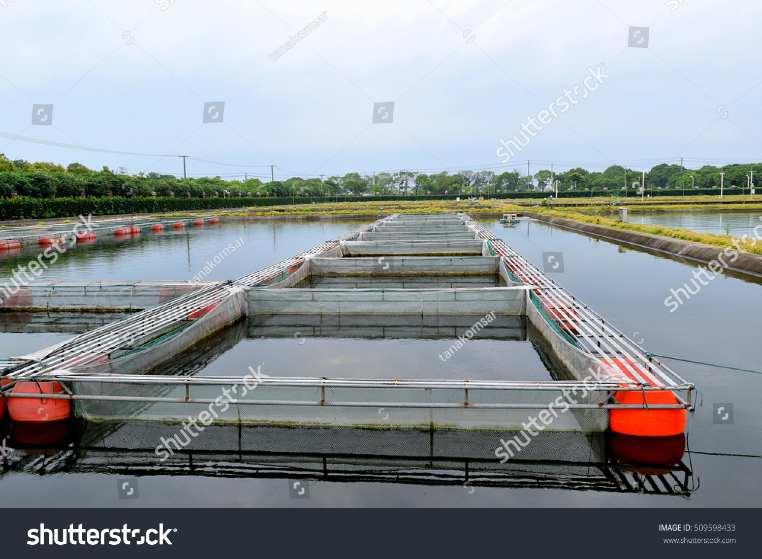 Floating cage pond commercial aquaculture farm stock photo for Floating fish pond