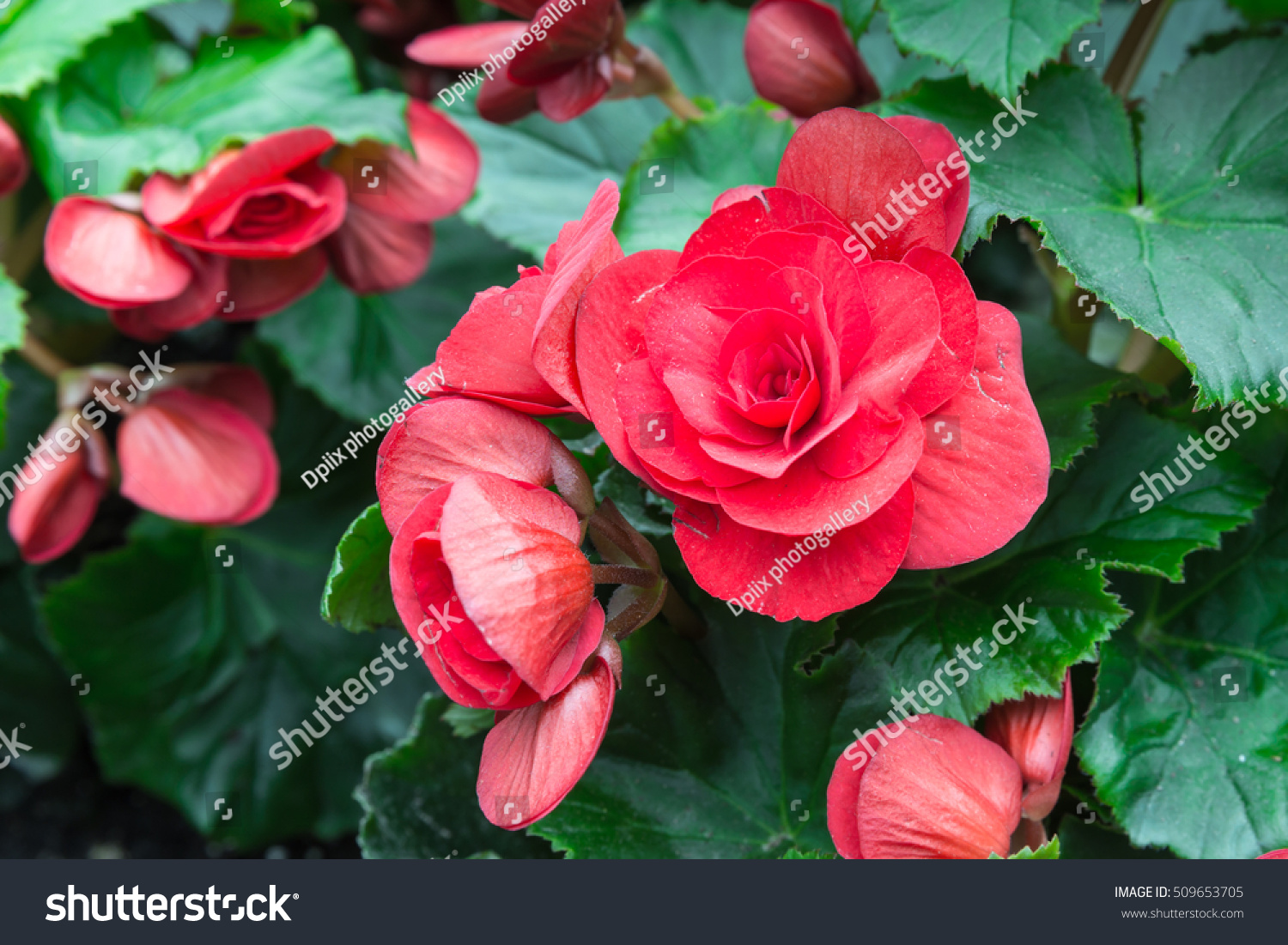 Red flowers green leaves beautiful flowers stock photo edit now red flowers green leaves beautiful flowers in the garden inside the dome izmirmasajfo