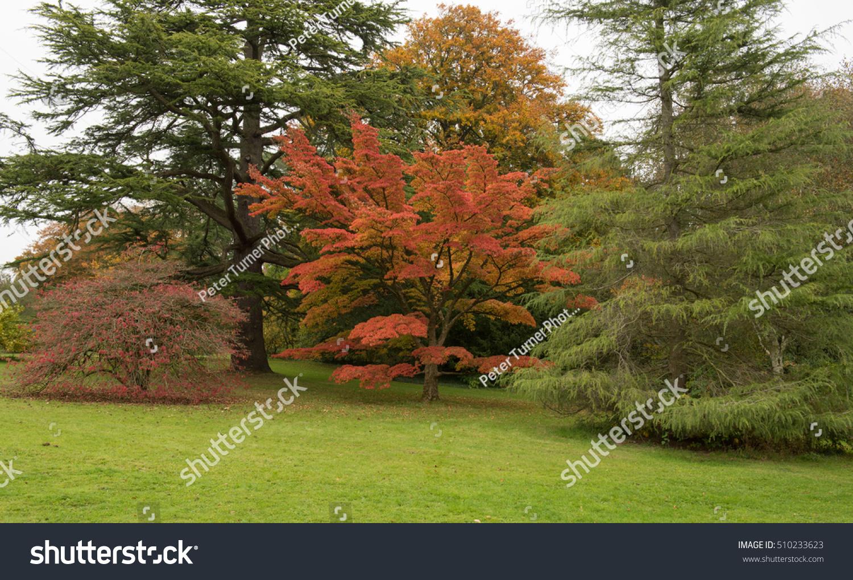 Bright Autumnal Colours On Woodland Walk Stock Photo (Edit