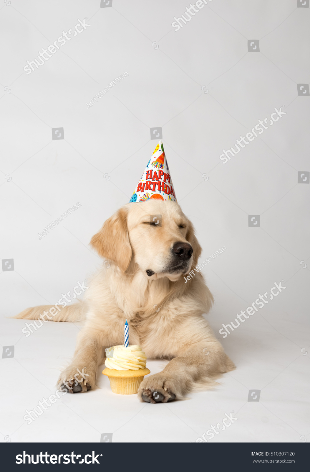 Birthday Dog With Party Hat And Cupcake Seems Unimpressed By His Shot On White