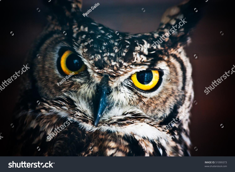 Small European Owl Nocturnal Bird Prey Stock Photo 51099373 ...