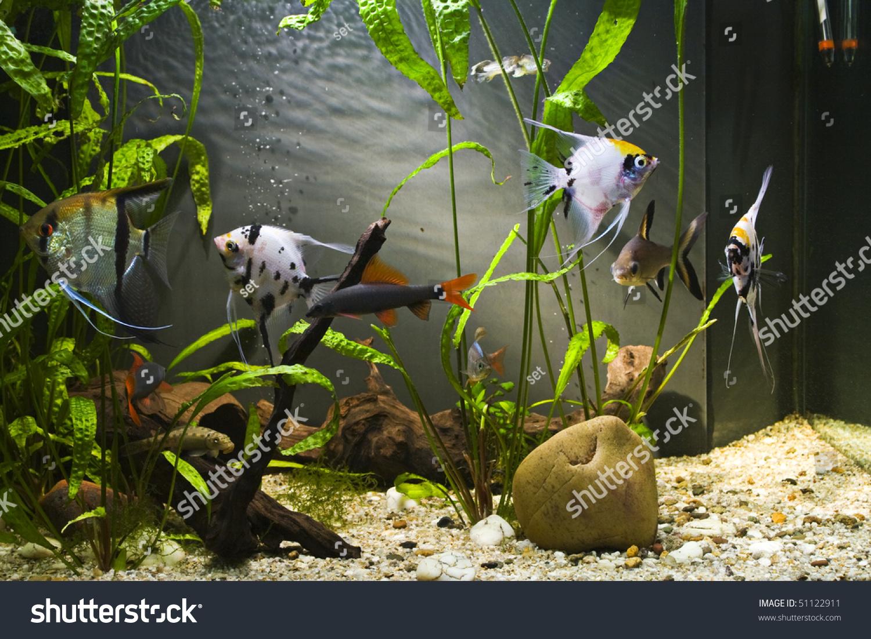 Colorful fish for aquarium freshwater - Tropical Freshwater Aquarium With Colorful Fish And Green Plants