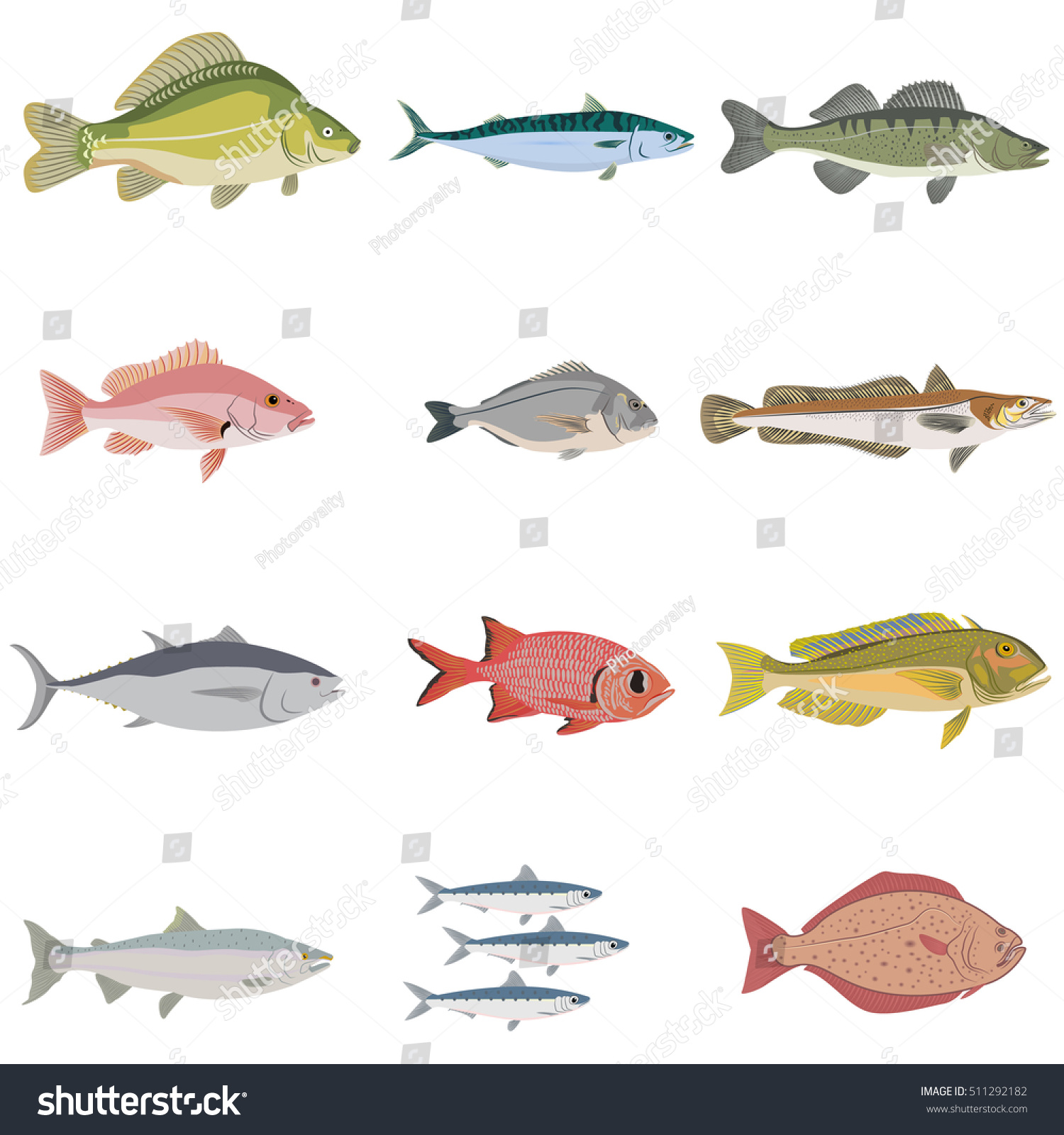 Vector set difference kind fish river stock vector for Animals that are included in the cuisine of seafood