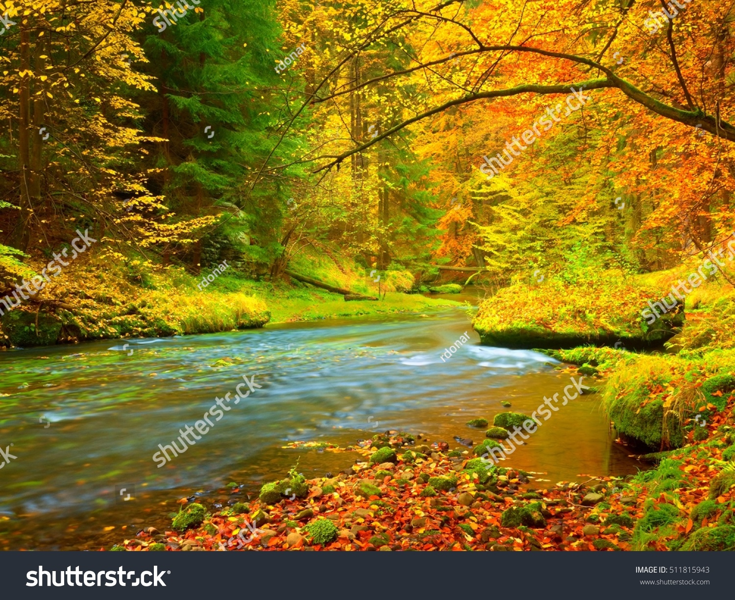 Autumn Landscape Colorful Leaves On Trees Stock Photo (Edit Now ...