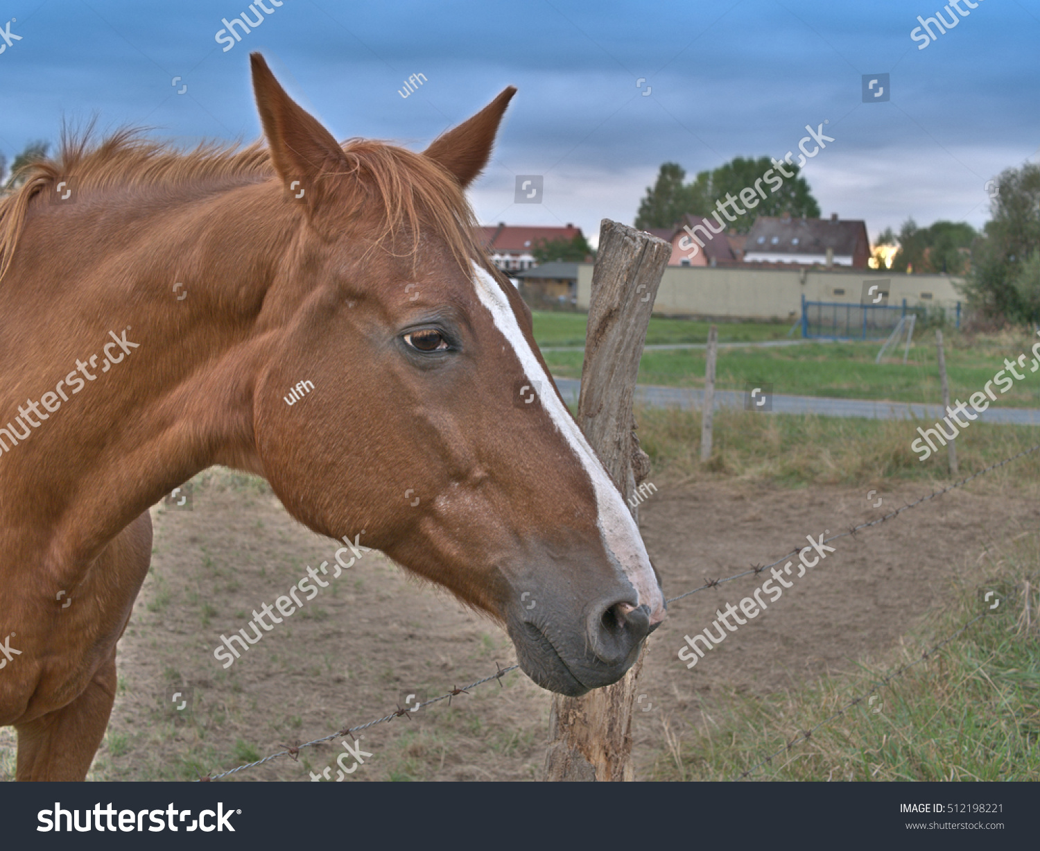 Horse ignores you place your text stock photo 512198221 shutterstock horse ignores you place your text symbol logo at the top buycottarizona