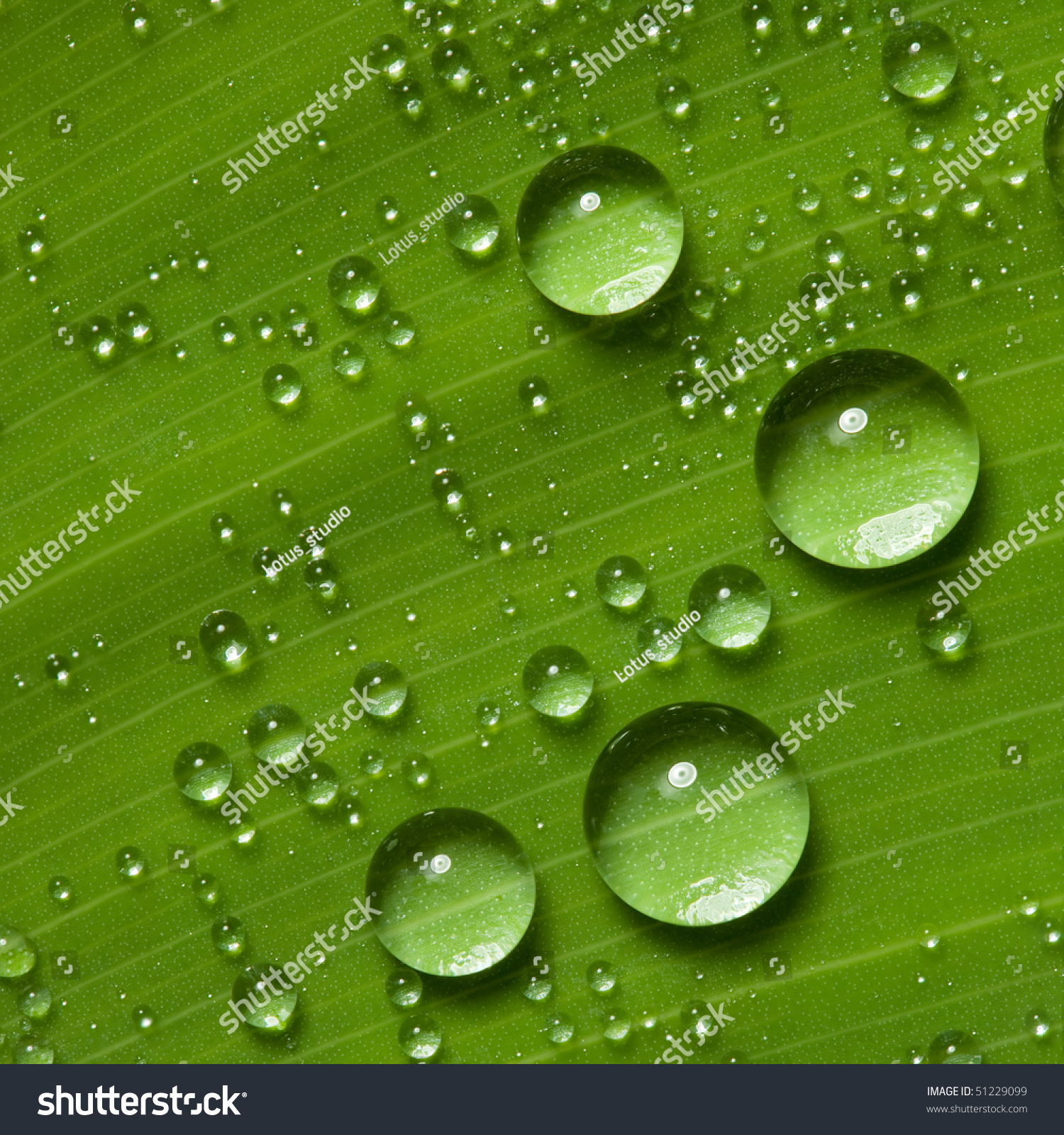 Water Drops On Fresh Green Leaf, Isolated On White Stock