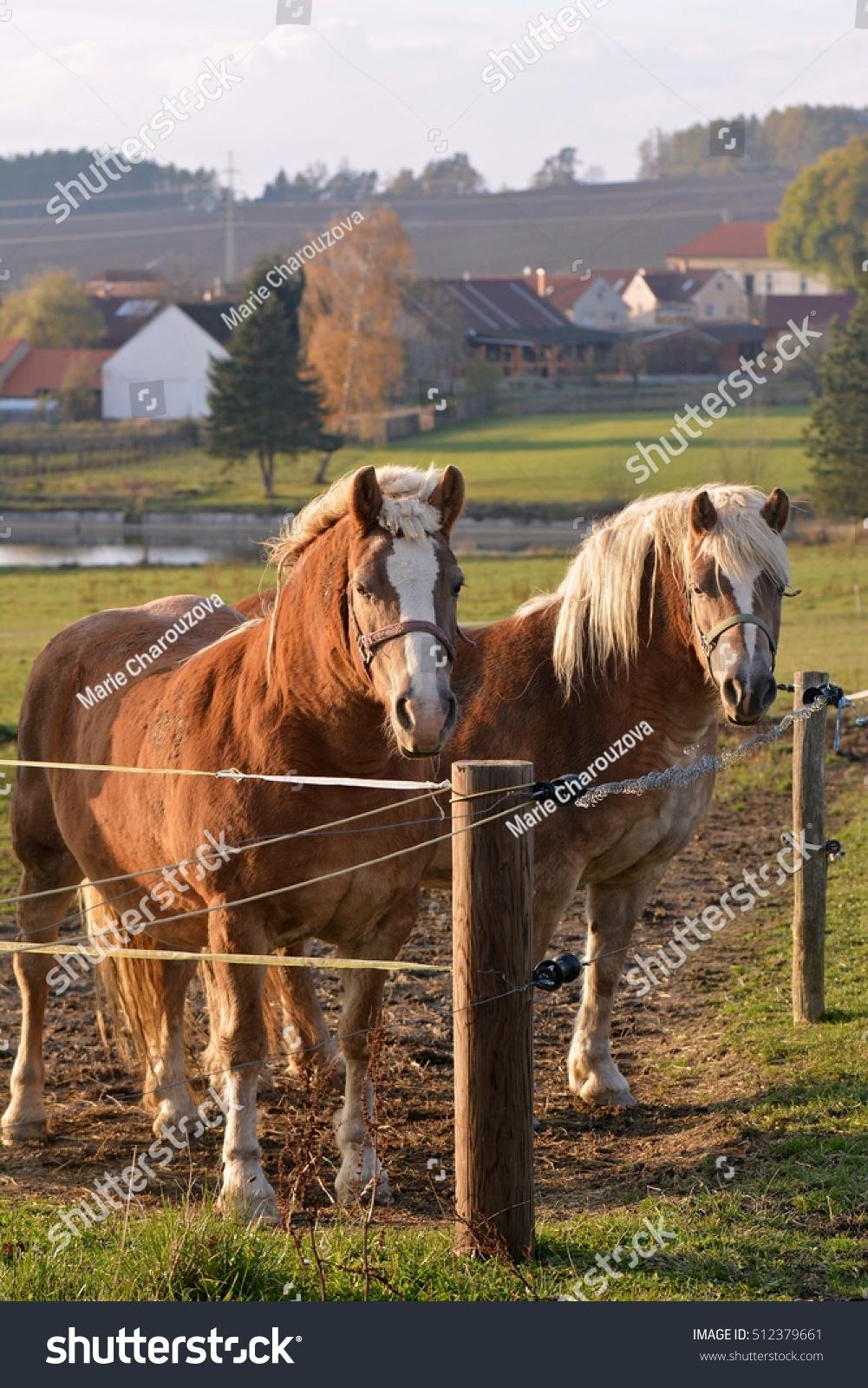 Horses On Pasture Stok Fotoğrafı 512379661