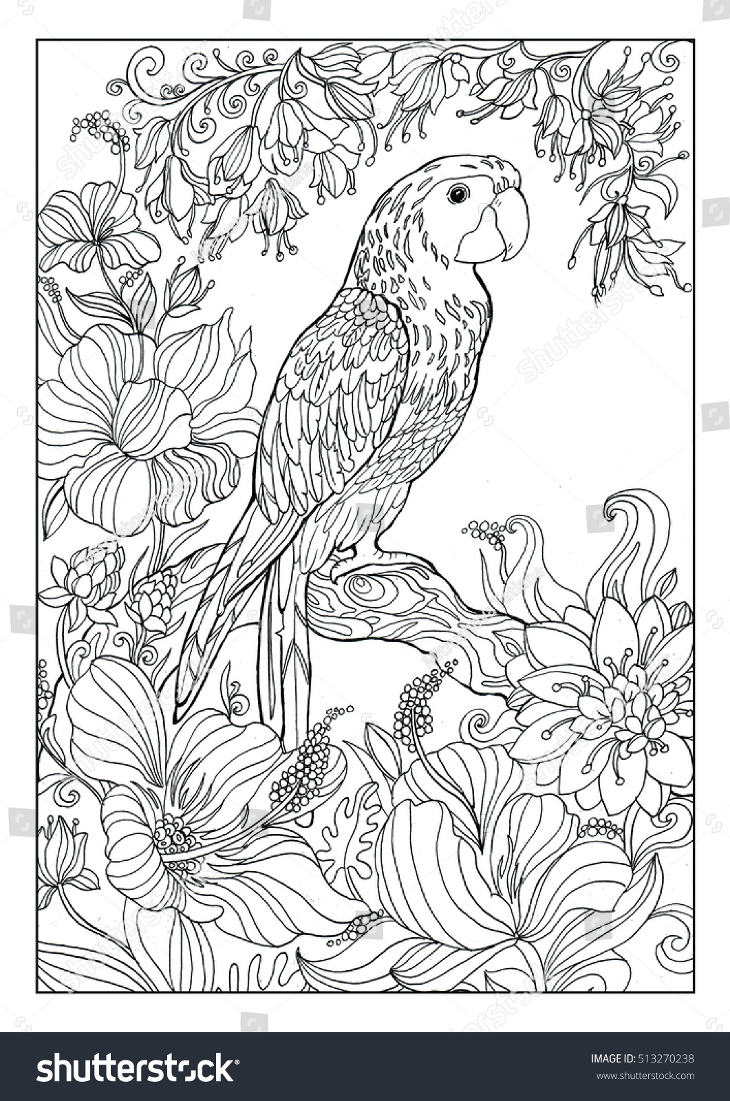 Parrot Coloring Pages Adults Stock Illustration 513270238 - Shutterstock